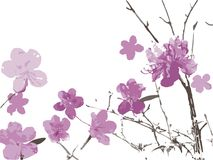 Spring flowers blossoming. Blossoming spring flowers on a white background Stock Image