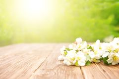 Spring flowers of blossoming apple tree branches on rustic wooden table over green garden. Sunbeam stock photography