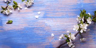 Spring Flowers on the blue background of an old vintage blue board.  stock photography