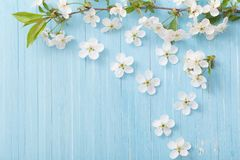 Spring flowers on blue background. Spring flowers on blue wooden background stock photos