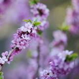 Spring flowers on blurred background Stock Image