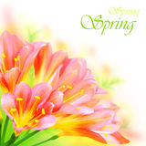Spring flowers border Stock Photography
