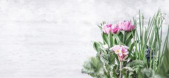 Spring flowers border with tulips, primrose and snowdrops flowers at white wooden wall background with bokeh. Springtime gardening. Concept stock images