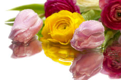 Spring flowers bouquet Royalty Free Stock Photo