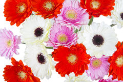 Spring Flowers bouquet from above Royalty Free Stock Photography