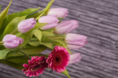 Spring flowers bouquet of lilac tulips and gerbera on gray background Royalty Free Stock Images
