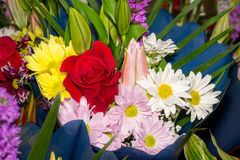 Spring flowers bouquet macro Royalty Free Stock Images