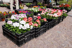 Spring flowers in boxes on the market Stock Photo