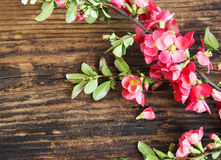 Spring Flowers Branch on Wooden Background Stock Photos