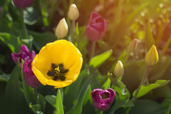 Spring flowers bright and spiritual concept with bright light and morning sun. Spring flowers bright and spiritual concept with bright light and morning sun Stock Image