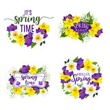Spring flowers bunches and bouquets vector icons. Hello Spring flowers bunch for springtime holiday greeting card. Vector floral wreath bouquet set of daffodils Royalty Free Stock Image