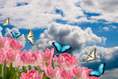 Spring flowers and butterflies Stock Photos