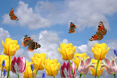 Spring flowers and butterflies Royalty Free Stock Photography