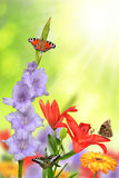 Spring flowers with butterflies Stock Images