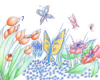 Spring flowers and butterflies hand drawn background pencil and Stock Photography