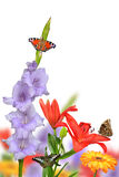 Spring flowers with butterflies Royalty Free Stock Photos