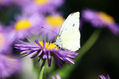 Spring flowers with butterfly Royalty Free Stock Image