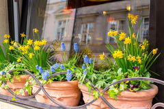 Spring flowers in the cafe window Stock Image