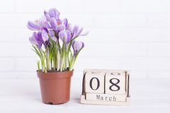 Spring flowers, calendar, place for text. Crocus and calendar on wall background. Perfect gift for mom stock photos