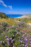 Spring flowers at cape greco,cyprus Royalty Free Stock Images