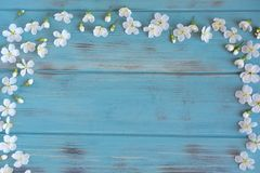 Spring flowers of cherry on a blue wooden background with a place for an inscription. Design for greeting card with cherry flowers. Spring flowers of cherry on a royalty free stock image