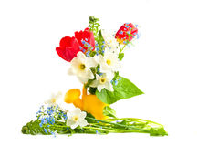 Spring flowers in a children's watering can Royalty Free Stock Images