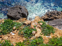 Spring flowers on the cliffs of the Mediterranean Sea Stock Image