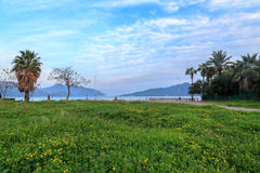 Spring flowers close to marmaris beach with palm trees. In Marmaris, Turkey Stock Photos