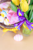 Spring flowers close up Royalty Free Stock Photos