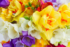 Spring flowers close up Royalty Free Stock Photo