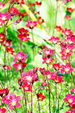 Spring flowers. Stock Image