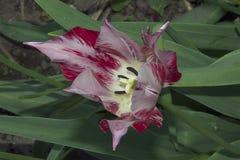 Spring flowers Stock Photos