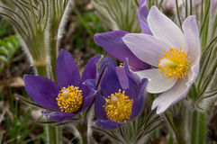 Spring flowers close-up Stock Photos