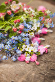 Spring flowers close up Royalty Free Stock Image