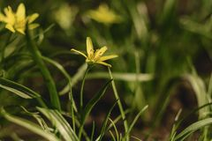 spring flowers closup view royalty free stock images