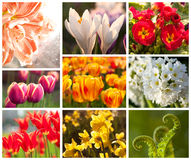 Spring flowers, collage Stock Images