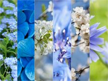 Spring flowers collage Stock Photography
