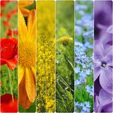 Spring flowers collage Stock Photo