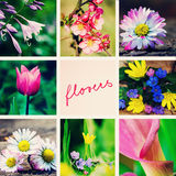 Spring flowers collage Royalty Free Stock Image