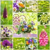 Spring flowers collage Stock Images