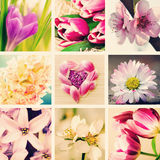 Spring flowers collage Royalty Free Stock Photography