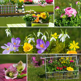 Spring flowers collage royalty free stock photos
