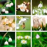 Spring flowers collage Royalty Free Stock Images