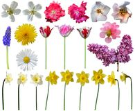Spring flowers collection. Beautiful flower elements isolated on white background. Isolation is on a transparent layer in the PNG format royalty free stock images