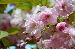 Spring  flowers composition Royalty Free Stock Image
