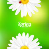 Spring flowers composition. Stock Photography
