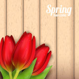 Spring flowers composition. Stock Photo