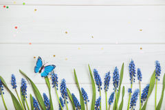 Spring flowers composition for postcard. Muscari on wooden backg Stock Image
