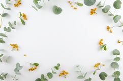 Spring flowers composition. Rectangular frame made of yellow rowan berries and gree eucalyptus branches on white. Background. Flat lay, top view, copy space stock image