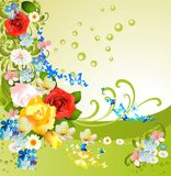 Spring flowers, Royalty Free Stock Image